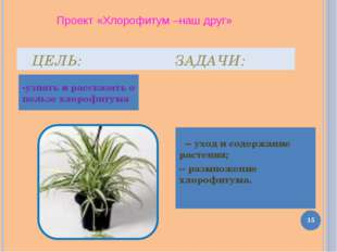 ЦЕЛЬ: ЗАДАЧИ: -узнать и рассказать о пользе хлорофитума -- уход и содержание