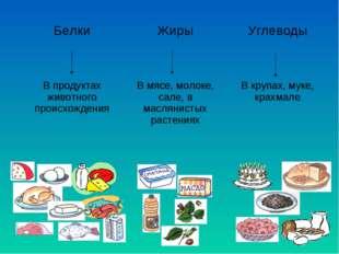 БелкиЖирыУглеводы  В продуктах животного происхожденияВ мясе, молок