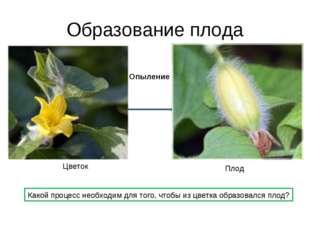 Образование плода Цветок Плод Опыление Какой процесс необходим для того, чтоб