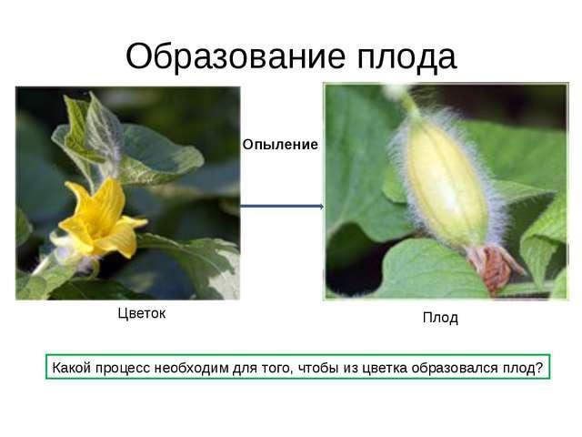 Образование плода Цветок Плод Опыление Какой процесс необходим для того, чтоб...
