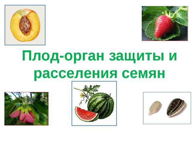 Плод-орган защиты и расселения семян
