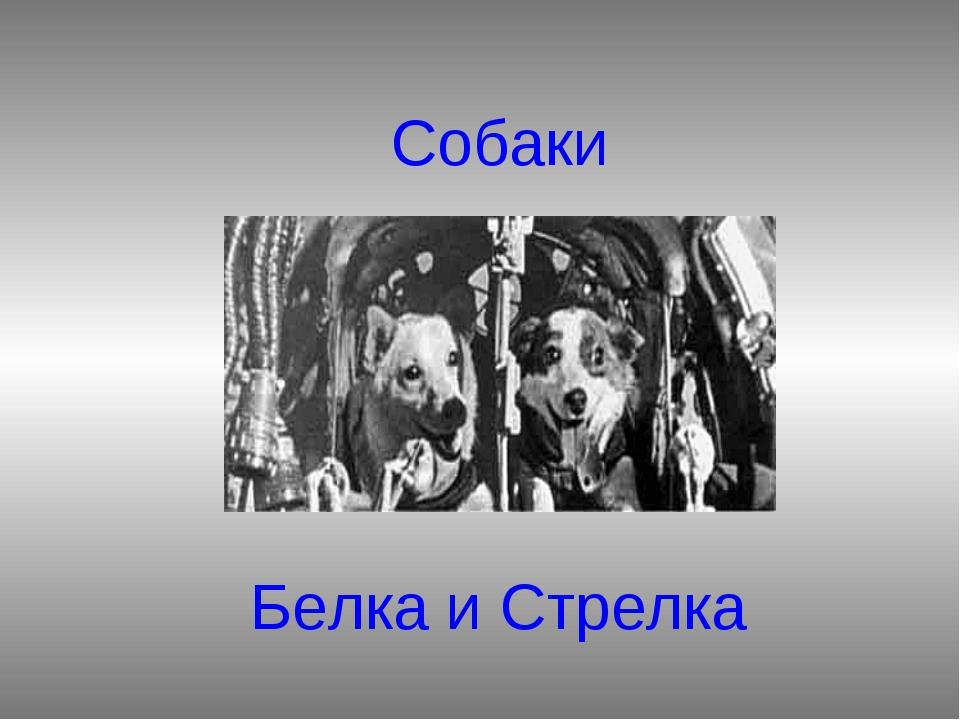Собаки Белка и Стрелка