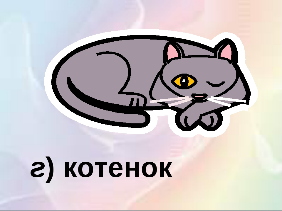 г)котенок
