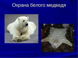 Охрана белого медведя