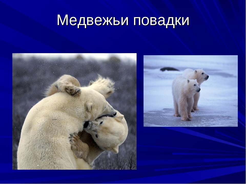 Медвежьи повадки