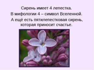 Сирень имеет 4 лепестка. В мифологии 4 – символ Вселенной. А ещё есть пятилеп