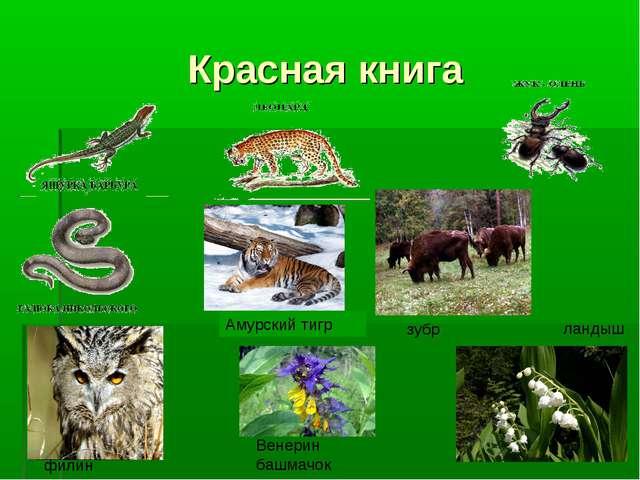 Красная книга Амурский тигр зубр филин Венерин башмачок ландыш