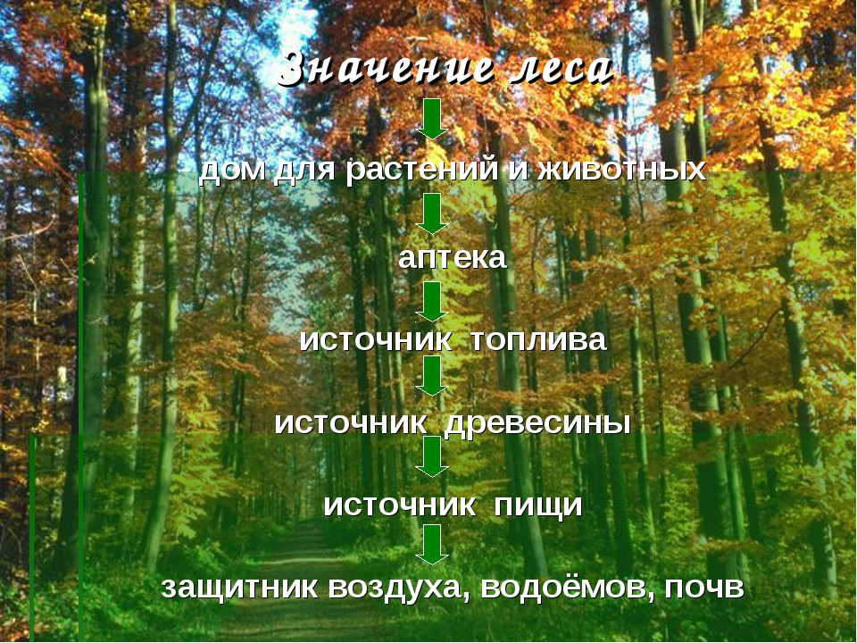 Значение леса дом для растений и животных аптека источник топлива источник др...