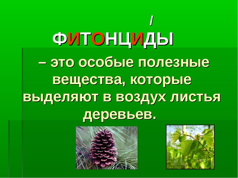 ФИТОНЦИДЫ – это особые полезные вещества, которые выделяют в воздух листья де...
