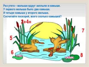 Раз утята – малыши вдруг заплыли в камыши. У первого малыша было два камыша.