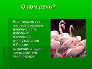 О ком речь? Эта птица имеет розовое оперение, длинные ноги, довольно массивн