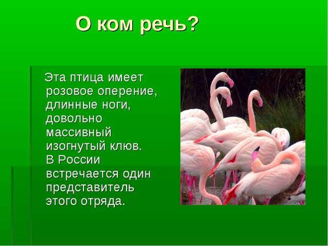 О ком речь? Эта птица имеет розовое оперение, длинные ноги, довольно массивн...