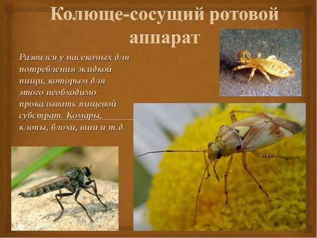 Развился у насекомых для потребления жидкой пищи, которым для этого необходим...