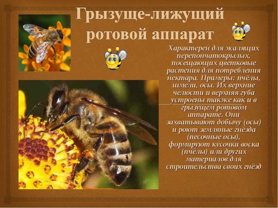 Характерен для жалящих перепончатокрылых, посещающих цветковые растения для п...