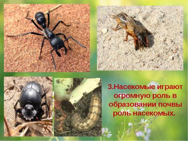 3.Насекомые играют огромную роль в образовании почвы роль насекомых.