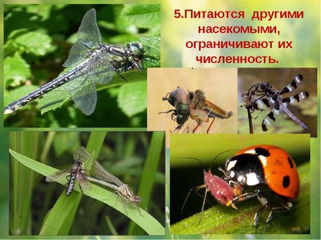 5.Питаются другими насекомыми, ограничивают их численность.