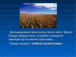 Для выращивания зерна нужны тепло и влага. Зерна в Канаде собирают много, и