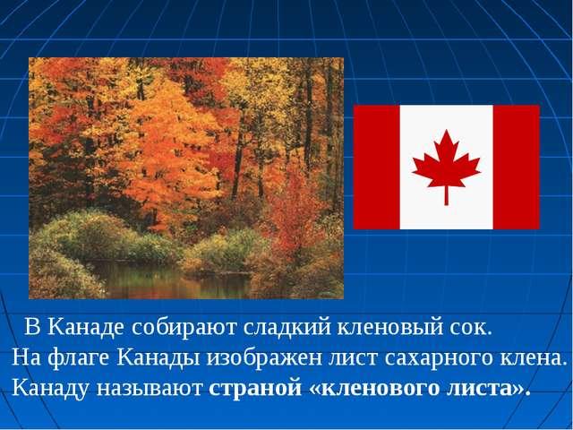 В Канаде собирают сладкий кленовый сок. На флаге Канады изображен лист сахар...