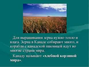 Для выращивания зерна нужно тепло и влага. Зерна в Канаде собирают много, и