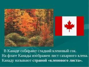 В Канаде собирают сладкий кленовый сок. На флаге Канады изображен лист сахар