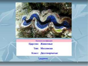 Тридакна Научная классификация Царство:Животные Тип:Моллюски Класс:Двуство