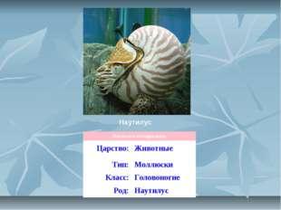 Наутилус Научная классификация Царство:Животные Тип:Моллюски Класс:Головон