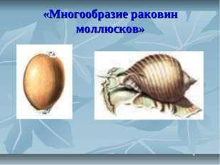 «Многообразие раковин моллюсков»