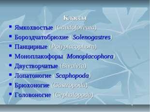 Классы Ямкохвостые (Caudofoveata) Бороздчатобрюхие (Solenogastres) Панцирные