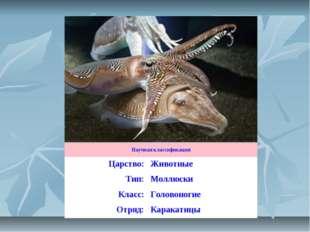 Научная классификация Царство:Животные Тип:Моллюски Класс:Головоногие Отря