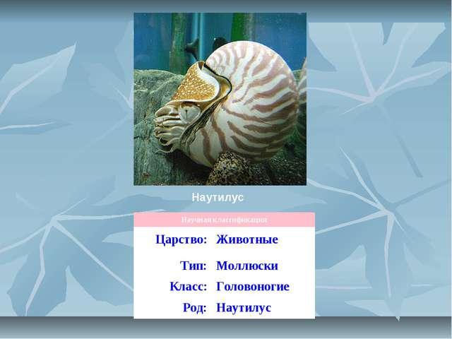 Наутилус Научная классификация Царство:Животные Тип:Моллюски Класс:Головон...