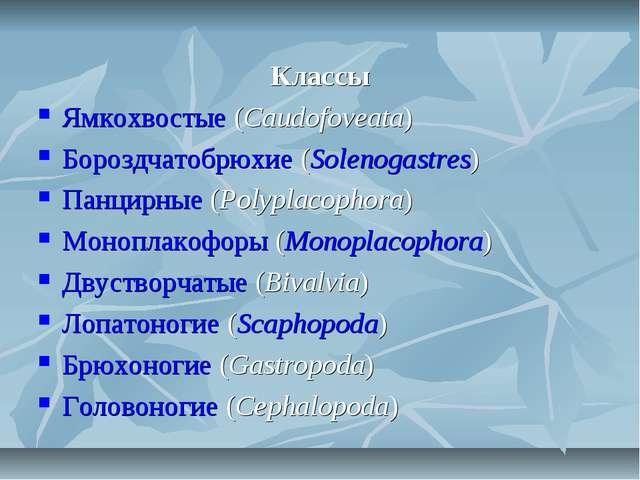 Классы Ямкохвостые (Caudofoveata) Бороздчатобрюхие (Solenogastres) Панцирные...