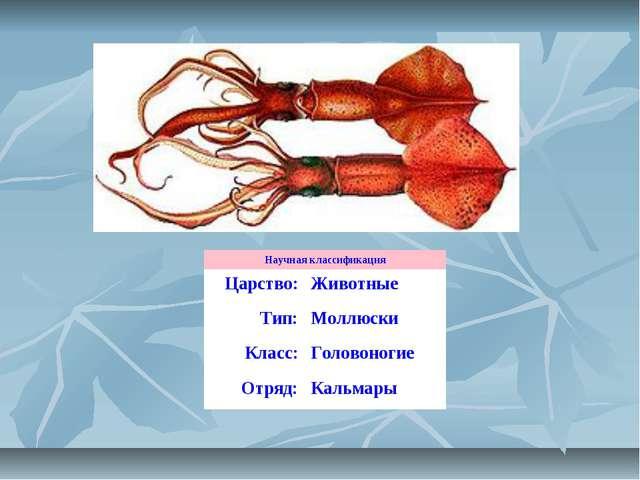 Научная классификация Царство:Животные Тип:Моллюски Класс:Головоногие Отря...