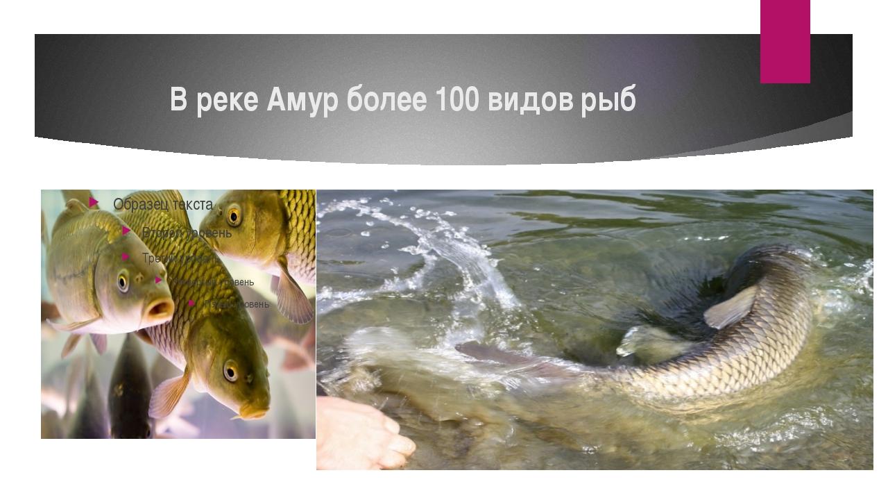 В реке Амур более 100 видов рыб