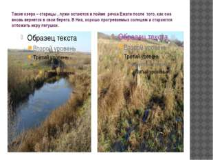 Такие озера – старицы , лужи остаются в пойме речки Ежати после того, как она
