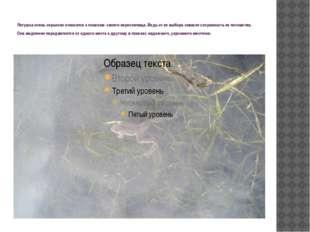 Лягушка очень серьезно относится к поискам своего нерестилища. Ведь от ее выб