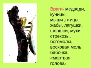 Враги- медведи, куницы, мыши ,птицы, жабы, лягушки, шершни, мухи, стрекозы, б