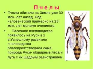 П ч е л ы Пчелы обитали на Земле уже 30 млн. лет назад. Род человеческий прим