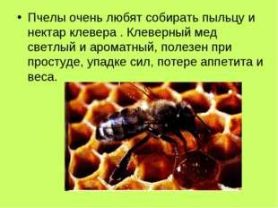 Пчелы очень любят собирать пыльцу и нектар клевера . Клеверный мед светлый и