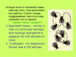 Больше всего в пчелиной семье рабочих пчел. Они выполняют все работы. Строят
