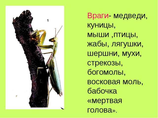 Враги- медведи, куницы, мыши ,птицы, жабы, лягушки, шершни, мухи, стрекозы, б...
