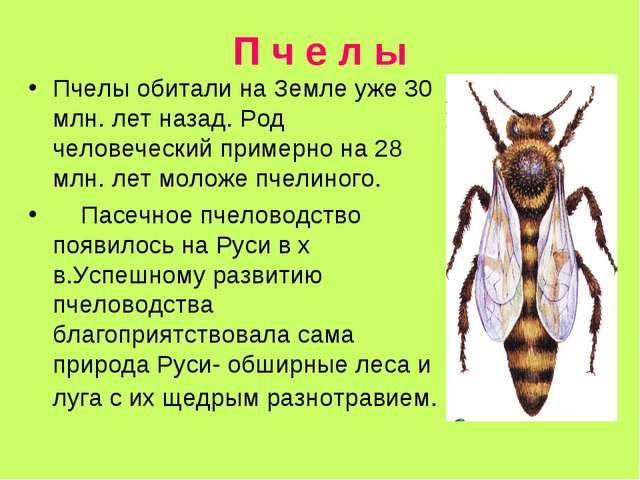 П ч е л ы Пчелы обитали на Земле уже 30 млн. лет назад. Род человеческий прим...
