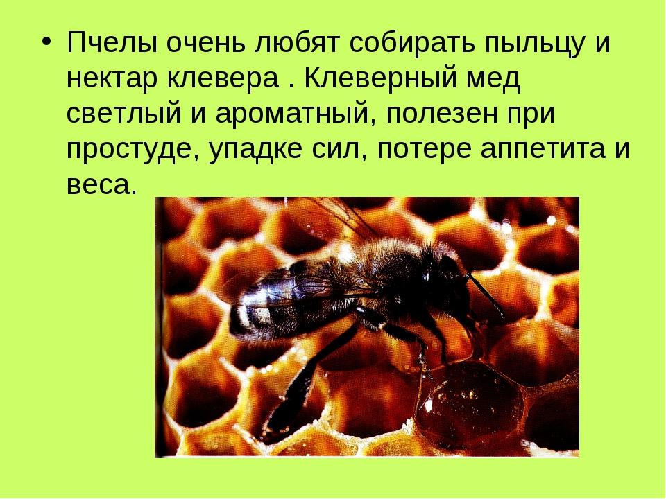 Пчелы очень любят собирать пыльцу и нектар клевера . Клеверный мед светлый и...