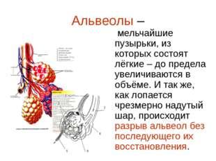 Альвеолы – мельчайшие пузырьки, из которых состоят лёгкие – до предела увелич