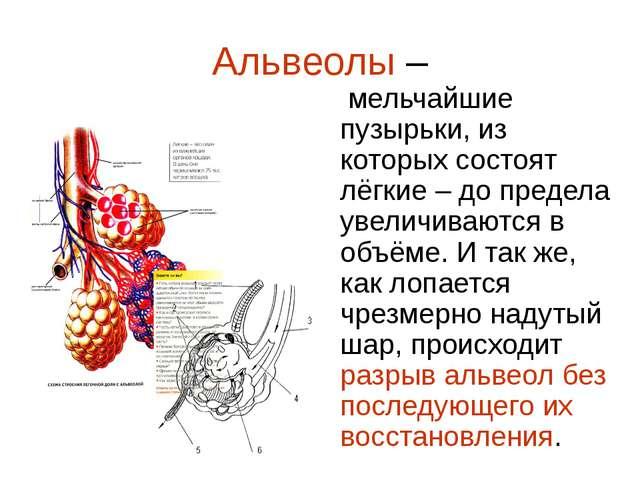 Альвеолы – мельчайшие пузырьки, из которых состоят лёгкие – до предела увелич...