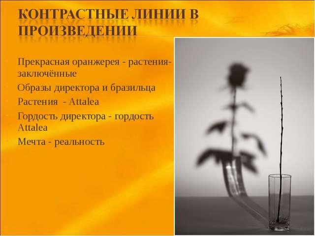 Прекрасная оранжерея - растения-заключённые Образы директора и бразильца Раст...