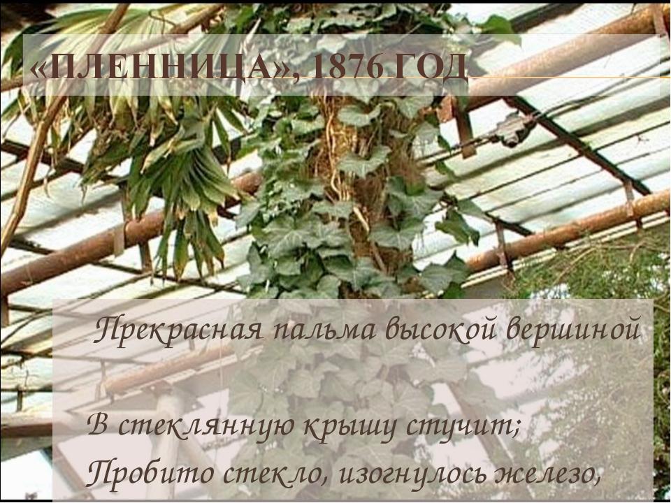 Прекрасная пальма высокой вершиной В стеклянную крышу стучит; Пробито стекло...
