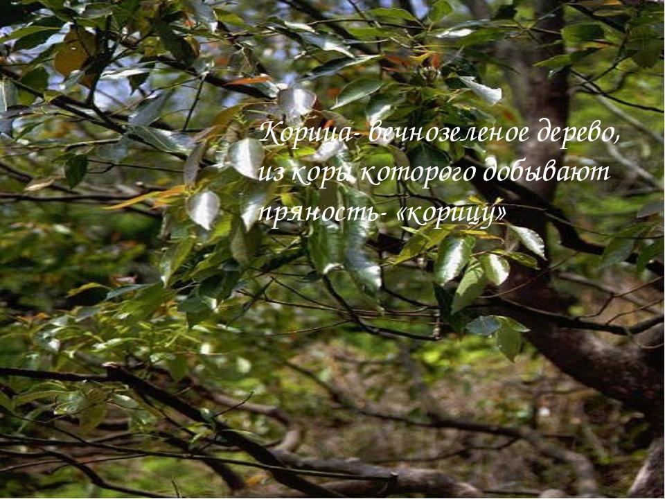 Корица- вечнозеленое дерево, из коры которого добывают пряность- «корицу»