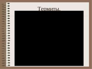 Термиты.
