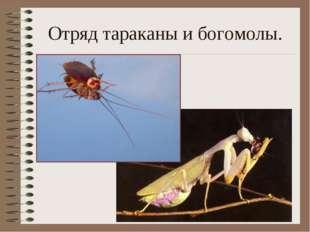 Отряд тараканы и богомолы.