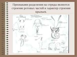 Признаками разделения на отряды являются строение ротовых частей и характер с